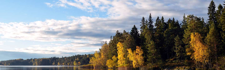 Schweden Urlaub Wald